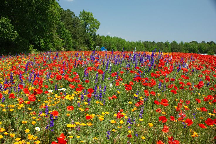 72 best north carolina wildflowers images on pinterest