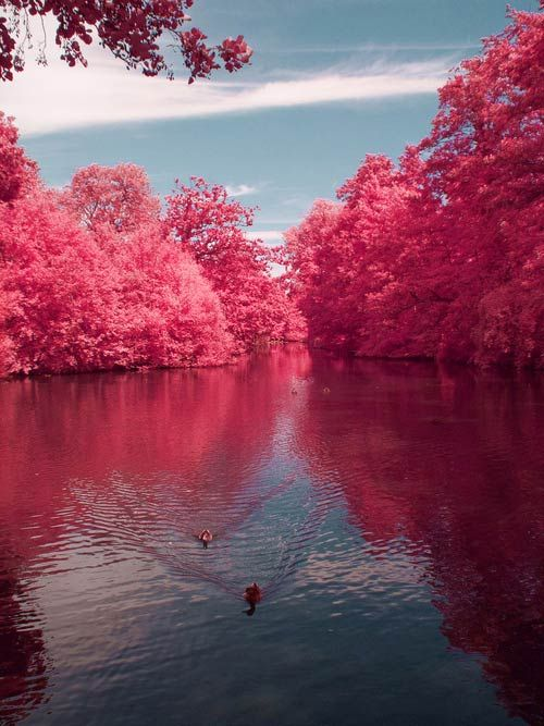 Beautiful Picture of Cherry River
