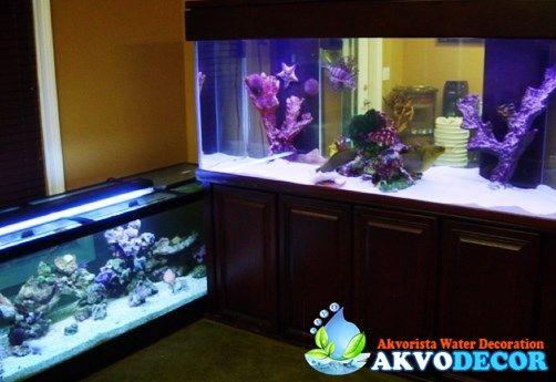 Harga Aquarium Ikan Hias Laut