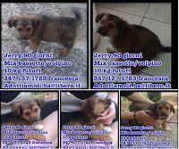Ohana Dog_Blog: Cane bassotto in adozione