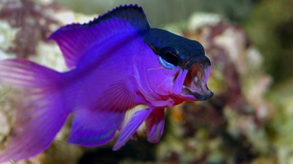 Buy Saltwater Aquarium Fish Online