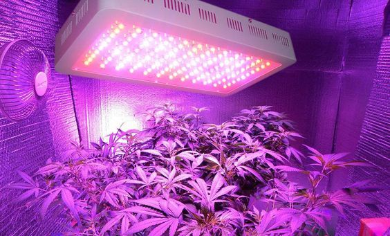 Best LED Grow Lights for Growing Cannabis