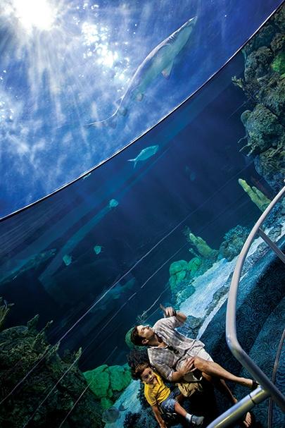 39 best Aquarium Pyramid images on Pinterest Aquarium