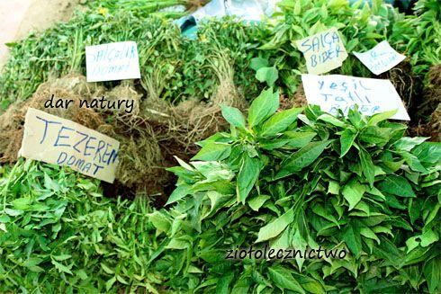 Różnorodność natury jest przeogromna, na Ziemii występuje bowiem ponad 450 tysięcy roślin wyższych, a tylko około 15% z nich została zbadana. Tym sposobem odkryto już około 20 tysięcy ziół leczniczych, dotyczy co wielu krajów. W księgacj opisanych jest niestety zaledwie 1884, z czego w samej Polsce 230 roślin.