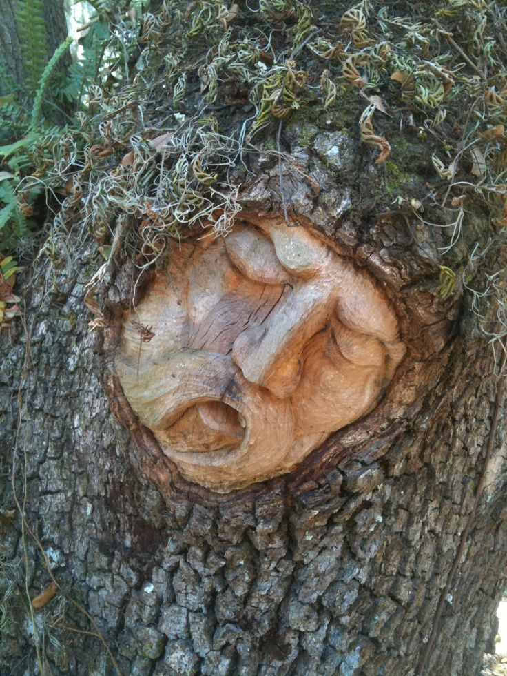 Best trees images on pinterest tree carving