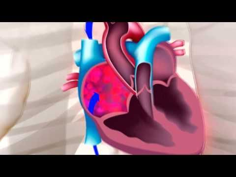 CORAZÓN humano: forma y función. - YouTube