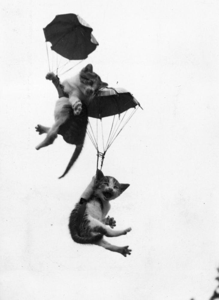 """Parachuting cats..the top cat is like """"I""""ll get you, don't worry."""" lolz poor thing is super scared"""
