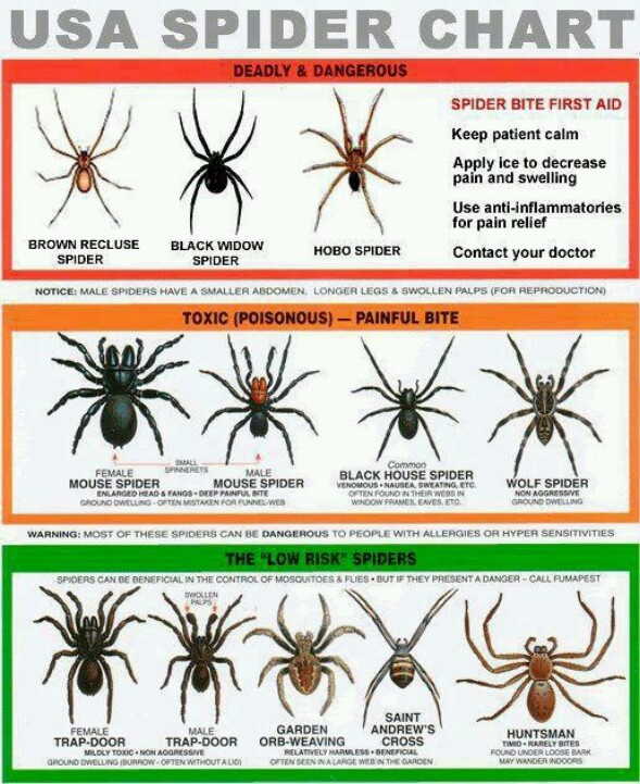 Let me be clear . . . there is no such thing as a non-dangerous spider.