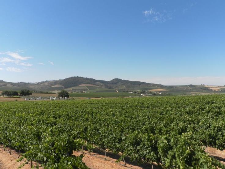 Wijnroute in Zuid-Afrika. Dat moet je zeker hebben gedaan. En natuurlijk proeven...