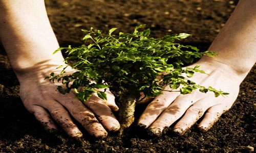 5 Different Soil Types – Know Your Soil Type | GROWTH AS NATURE INTENDED™