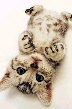 Too much cuteness!! Meaw haha