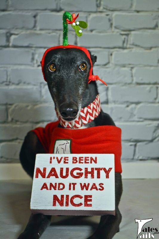 Silent Sunday 12/6 - I've Been Naughty... - Tales and Tails
