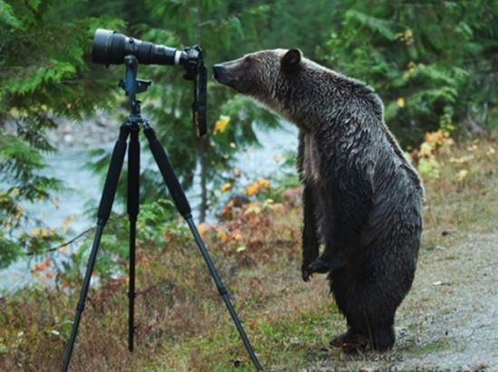 Kootenay_grizzly_photo_goes_viral_-_Nelson_Star.png