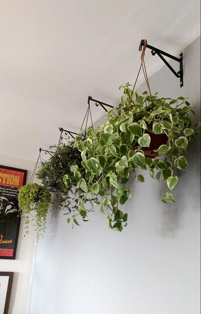 Ideas apartment garden wall hanging plants for 2019 Cool Plants, Green Plants, Plant Design, Garden Design, Plantas Indoor, Decoration Plante, Walled Garden, Office Plants, Bedroom Plants