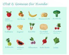 Gutes Obst und Gemüse für Hunde. Was darf mein Hund essen.