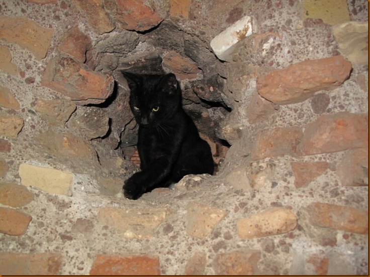 cats of the colosseum