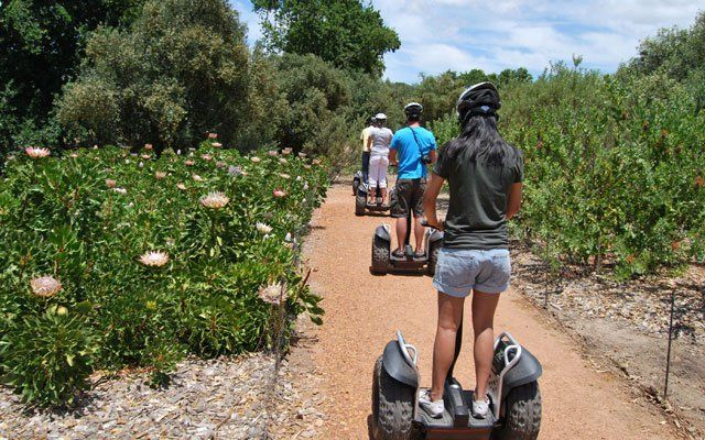 Segway tour of Spier wine farm close to Cape Town