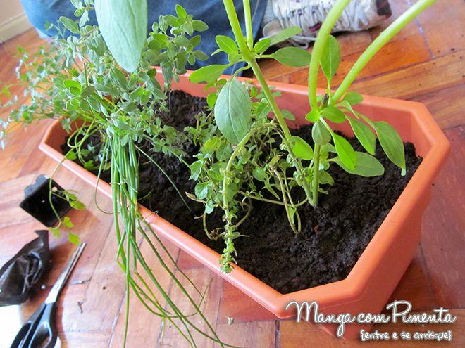 Horta em apartamento… um desejo realizado! Passo a passo de como preparar sua horta em casa.