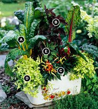 Compact Kitchen Container Garden: Gardens Ideas, Capsicum Annuum, Container Gardens, Ocimum Basilicum, Basil Ocimum, Gardens Plants Outdoors, Compact Kitchens, Small Spaces, Gardens Fillings