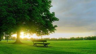весна, природа, деревья, рассвет, зеленая трава, скамейка