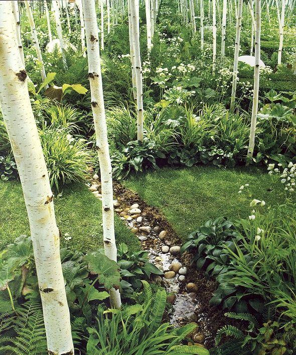 Birch woodland garden: