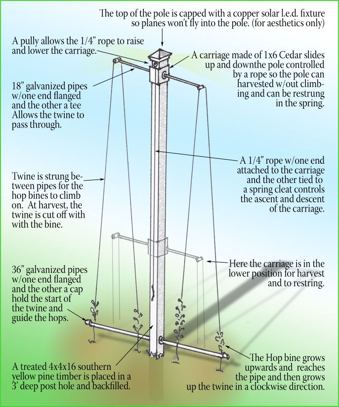 Hop trellis design... have been playing with hops cultivation for about 20 years now!