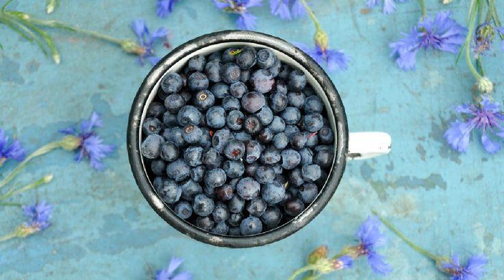 Léčivá borůvka - proti stresu, na dobré oči i hubnutí