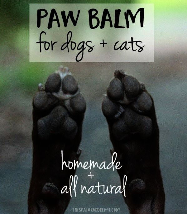 Ahh Pet Dogs For Free Adoption In Bangalore D Dog Paw Balm Paw Balm Dog Paw Care