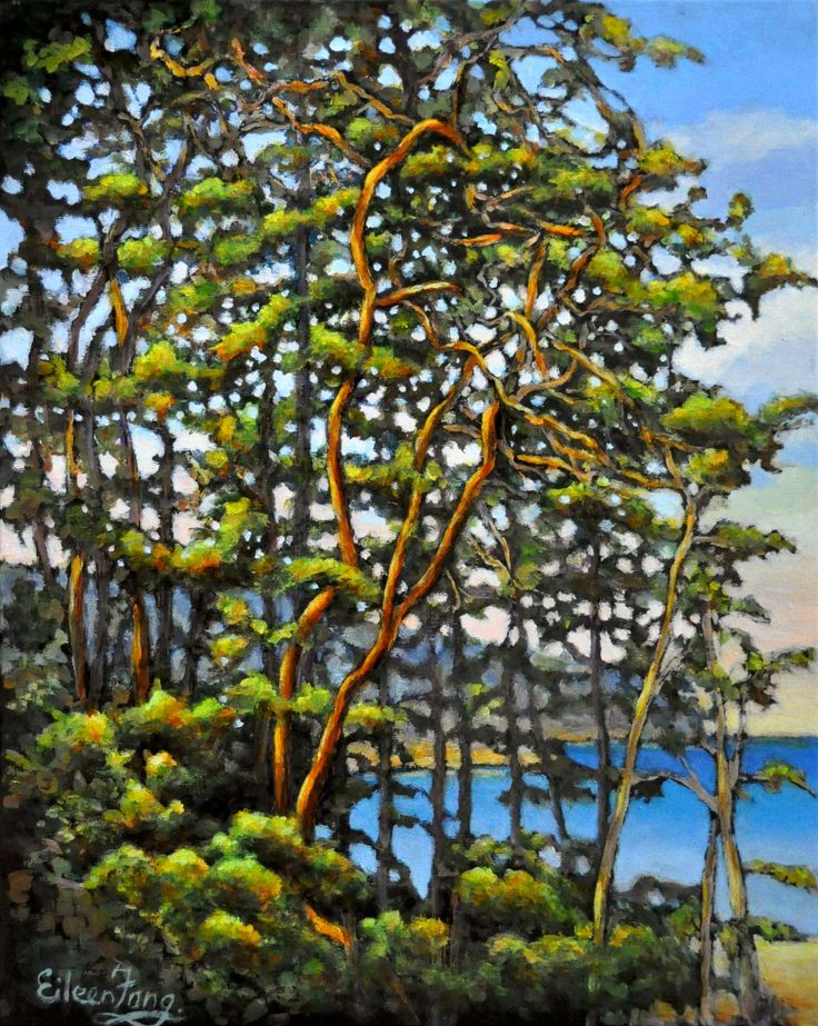 Seek Out Light, Arbutus Trees painting by Eileen Fong