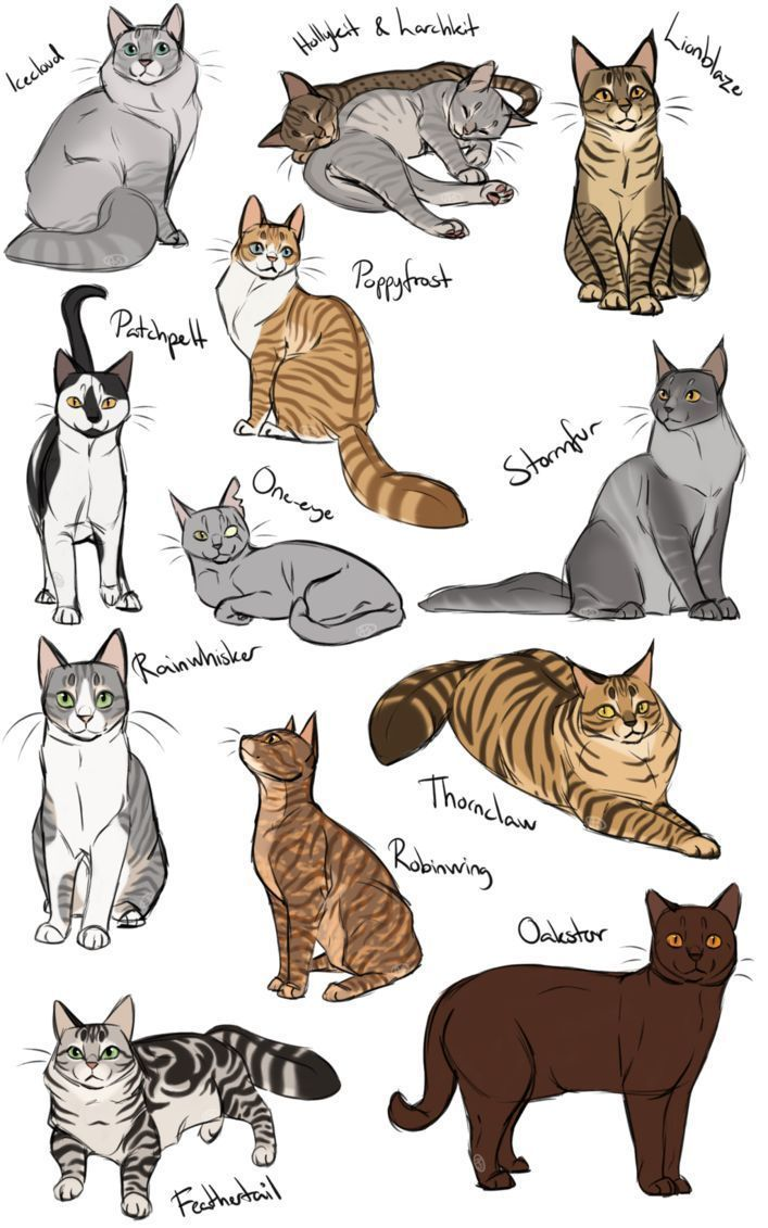 Pin On Cat Art Drawings Illustrations