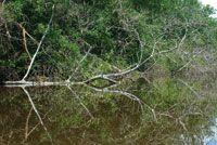 Deltas y Estuarios de Colombia - Colección Ecológica del Banco de Occidente