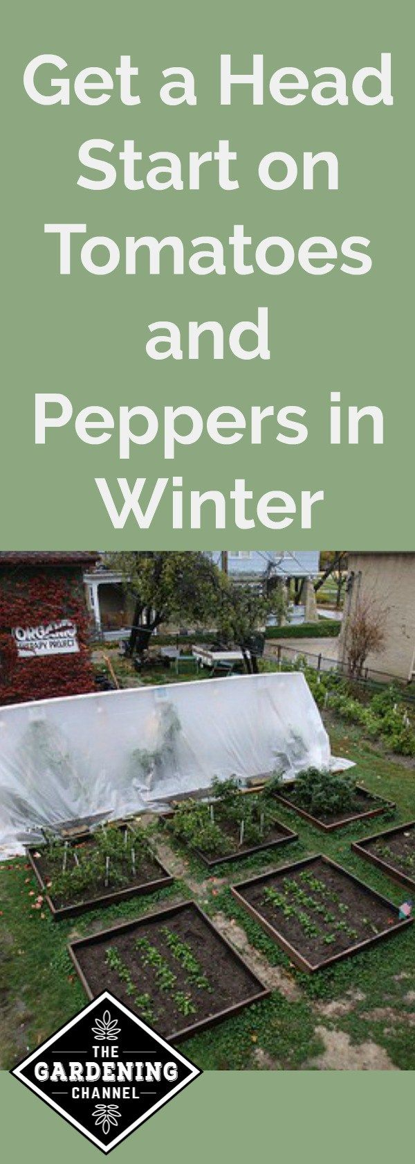 Get a head start on growing tomatoes and peppers in winter.  It doesn't have to be spring to start planning for vegetables in your garden