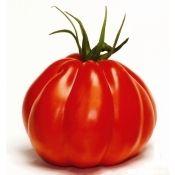 Tomate coeur de boeuf: barquette de 3 plants (224383)