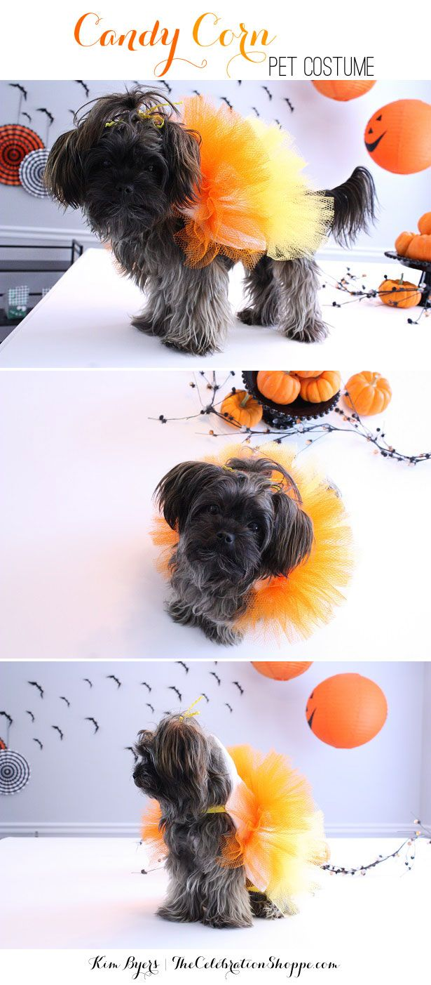 Will you be dressing your pet up for Halloween? {grin} Well I will! Actually our little dog, Boo (so appropriate, right!), will be going around the neighborhood twice. Once in a cute little candy c...