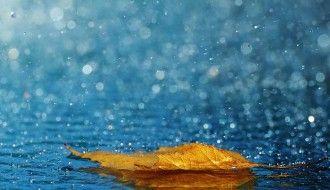 Rain Drop Wallpaper HD Natural Leaf 2560x1440px Resolution