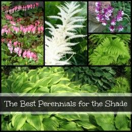 Gardening in the Shade: Annual Plants for Shady Areas