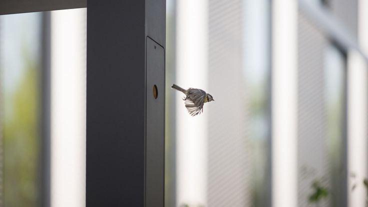 Architekci z pracowni Ultra Architects zaprojektowali latarnie z drewnianymi budkami dla ptaków we wnętrzu. W jednej z nich zalęgły się sikorki.