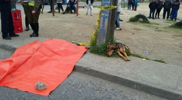 Quando Leonardo Valdes, de 23 anos, perdeu a vida atropelado em um acidente de carro na cidade de Concepción, no Chile, o seu cachorro e melhor amigo foi no mesmo momento ver o corpo, que ficou por algumas horas no local.