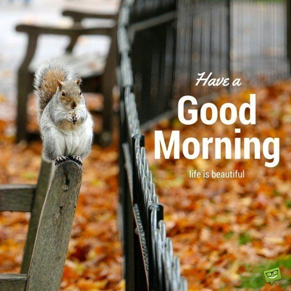 Have a good morning. Life is beautiful.