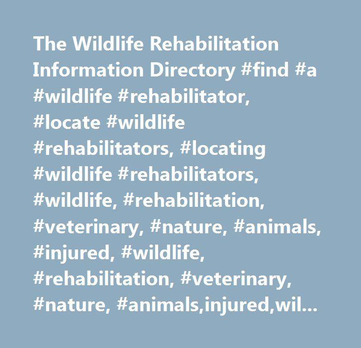 The Wildlife Rehabilitation Information Directory #find #a #wildlife #rehabilitator, #locate #wildlife #rehabilitators, #locating #wildlife #rehabilitators, #wildlife, #rehabilitation, #veterinary, #nature, #animals, #injured, #wildlife, #rehabilitation, #veterinary, #nature, #animals,injured,wildlife #rehabilitation,medicine, #animal,mammal,rehab,wild,avian,orphan,baby,babies, #wildilfe #rehabilitator #canada, #wildlife #rehabilitator #us, #wildlife #rehabilitator #outside #us…