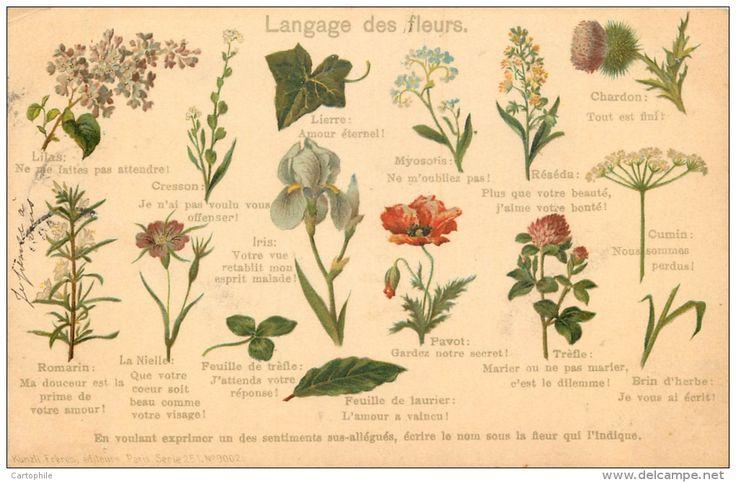 langage des fleurs (2) lilas, cresson, lierre, myosotis, réséda