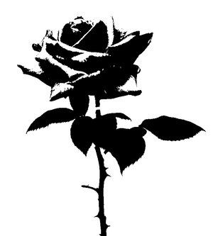 Black Rose Stencil Art