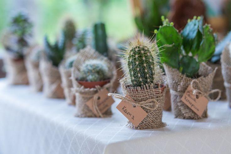 Кактусы на свадьбе, подарки гостям суку ленты, экосвадьба #организаторлучшихсвадеб #devinadesign #natadevina #натадевина #девинадизайн