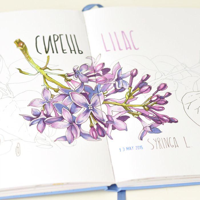 Lilac | by Anna Rastorgueva