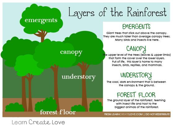 Layers Of The Rainforest Printable From Learncreatelove
