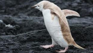 I want a pet penguin!