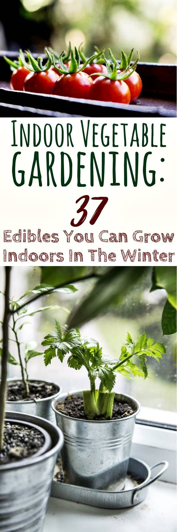 Indoor Vegetable Gardening: 37 Edibles You Can Grow Indoors In The Winter - As a prepper, one of the essential skills is for you to be able to sustain yourself and have food available to you the whole year, if and when you need it. One way of achieving this, is through an indoor vegetable garden. It doesn't take up a lot of space and, more importantly, is able to function entirely inside.
