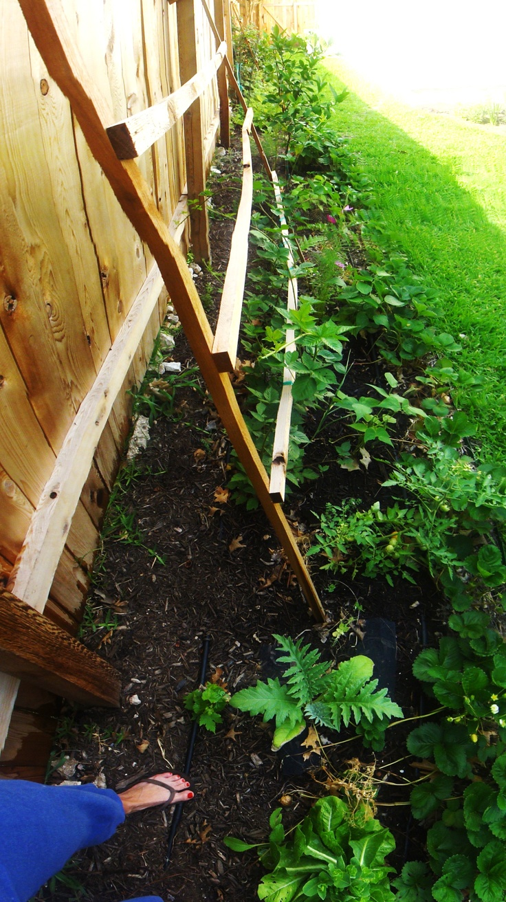17 Best images about trellis on Pinterest