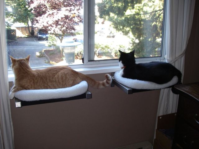 Hilary from Vancouver created this pair of window perches for her two boys Hank (orange) and Truman (Tuxedo) and they seem to be a perfect fit! She used the trusty old IKEA Ekby Bjarnum brackets and Jarpen shelves mounted just below the window sill. To create cozy cushions that don't slide off the shelves, Hilary…