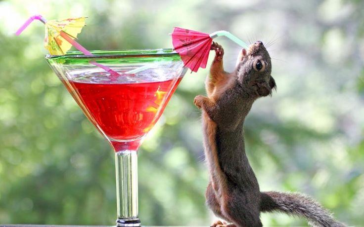 A_1WAR: 1-855-897-8484 #Wild #Animal #Removal | Got a #Raccoon ...